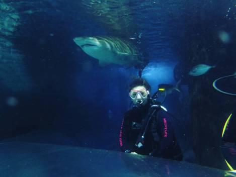 manly sea life aquarium
